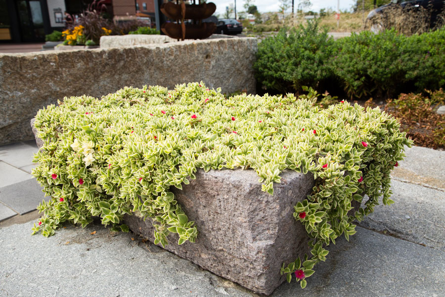 Fall Containers by Schumacher Companies