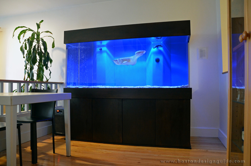 boston aquariums. Black Bedroom Furniture Sets. Home Design Ideas