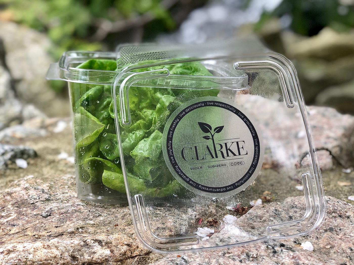 Clarke's Bibb butter lettuce
