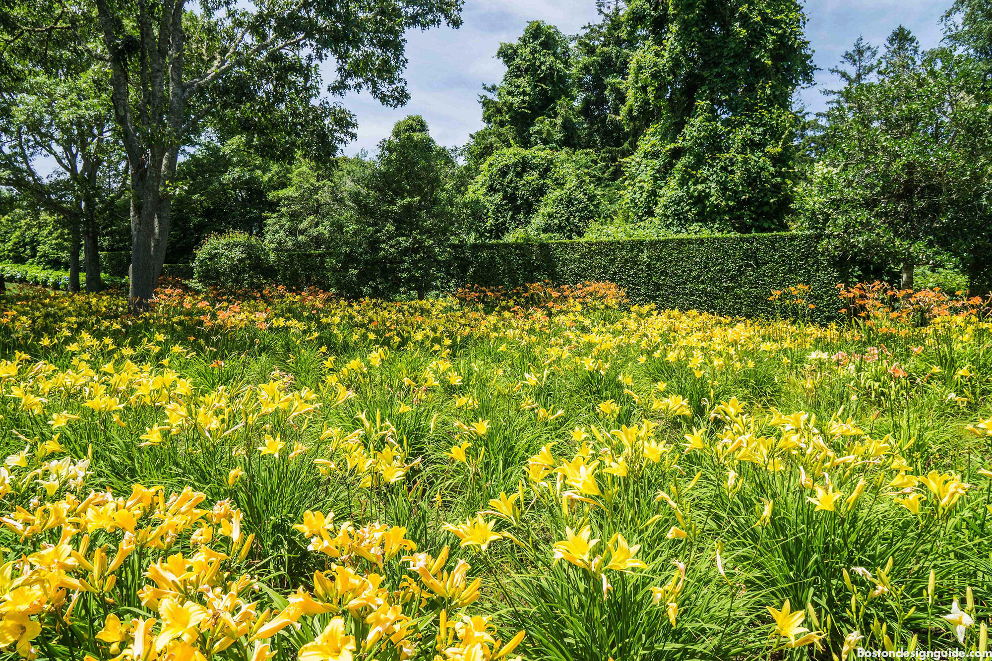 Sustainable garden of daylilies by Kimberly Mercurio Landscape Architecture