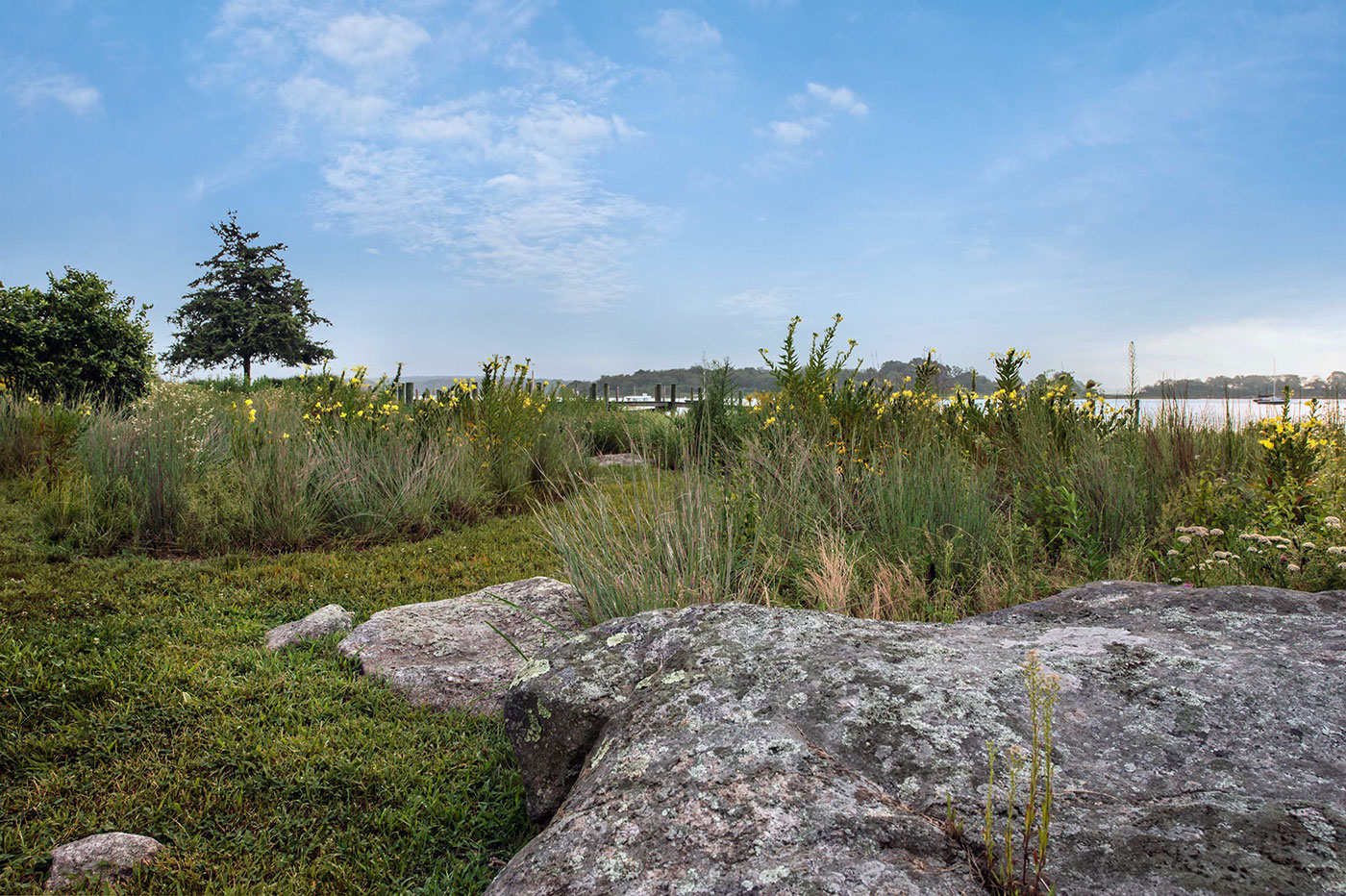 Coastal Meadow Expansion and Cultivation by Landscape Creations