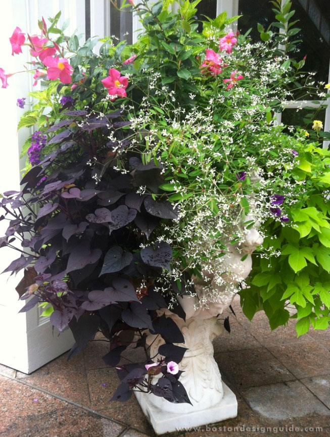 Ideas For Outdoor Container Gardens This Summer Boston