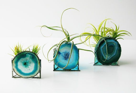 How To Decorate with Air Plants
