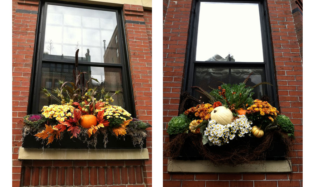 beacon bill boston flower box arrangements for fall