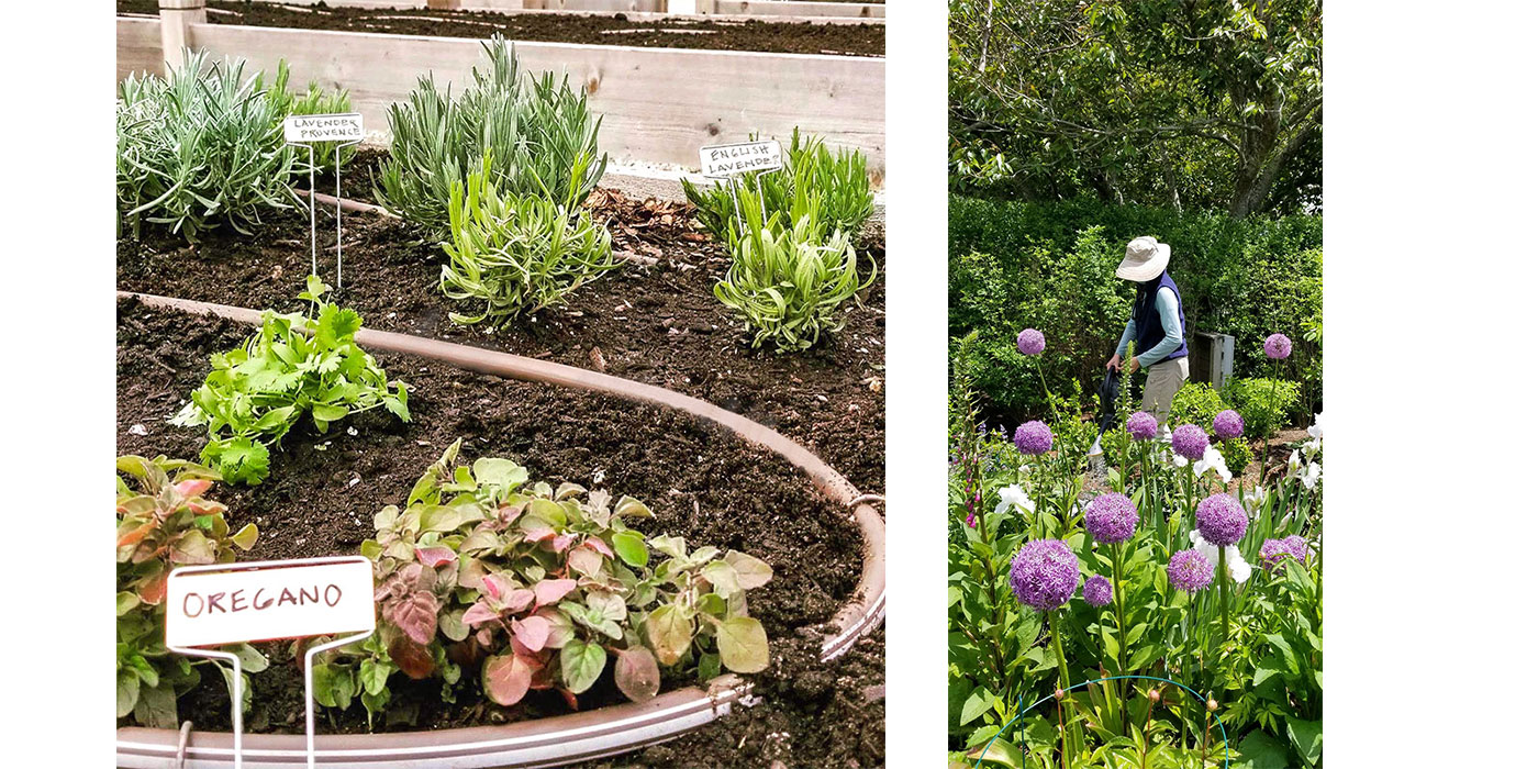 Botanica—at-home professional gardening services