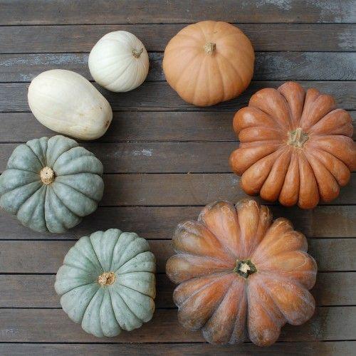 Trending for Fall: Muted Pumpkins + Gourds