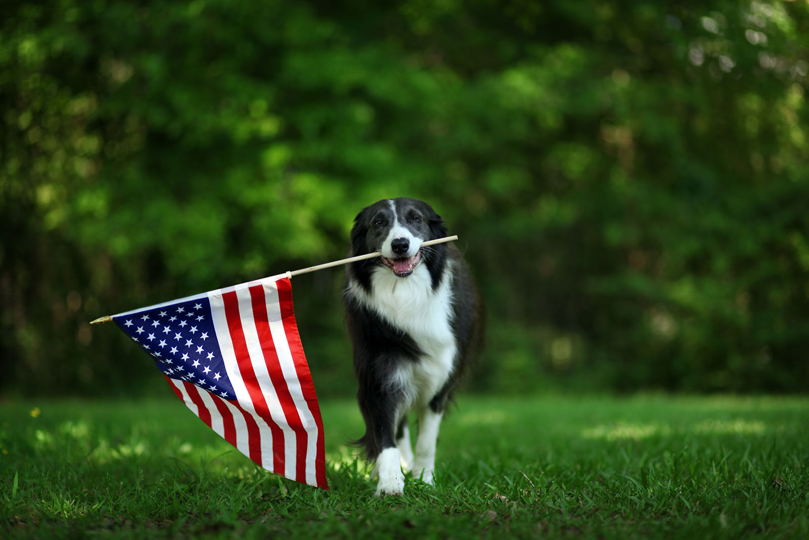 Simple ways to mark Memorial Day