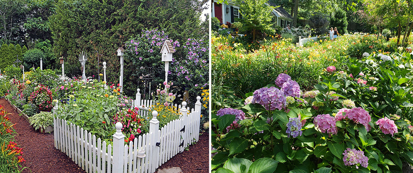 A Summer Garden Celebration—2020 Cape Cod Hydrangea Festival