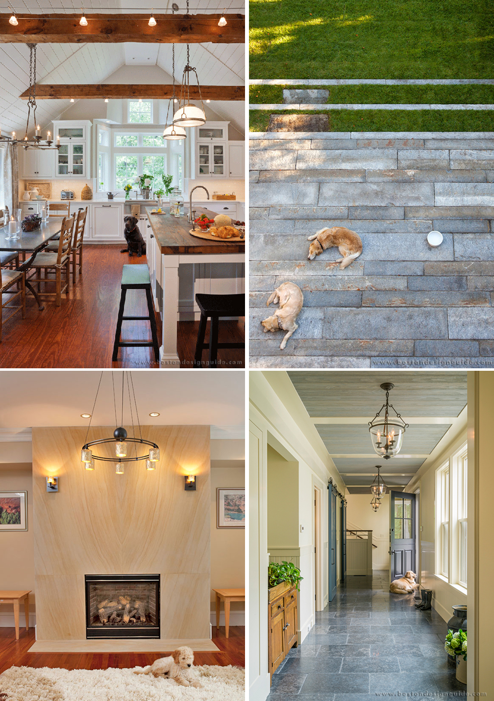 home design, puppies, dogs, national puppy day, architecture, builder New England