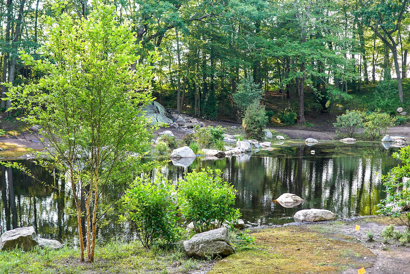 A naturalized pond restoration by landscape contractor Landscape Creations