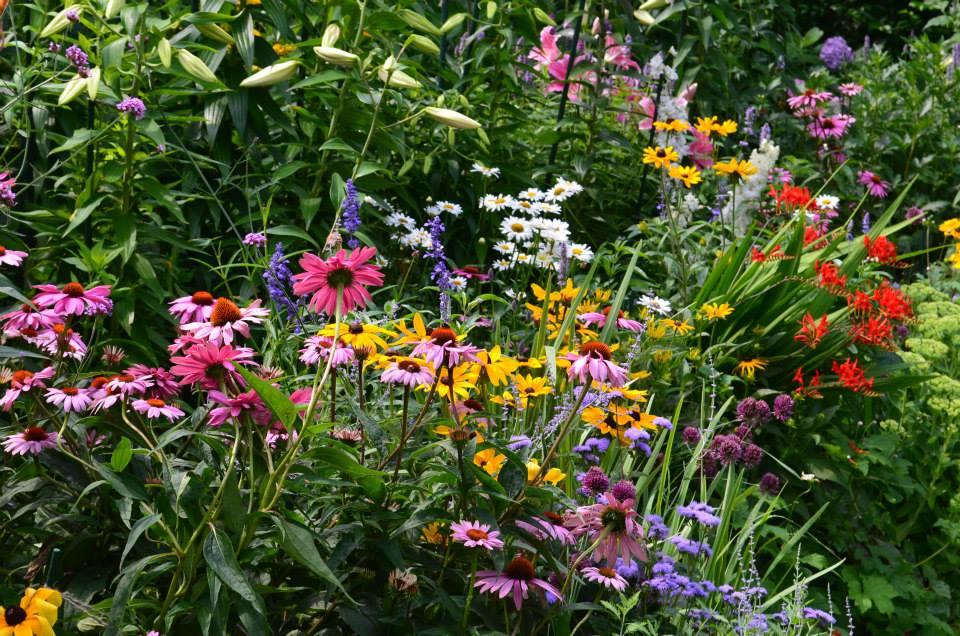 garden design and care