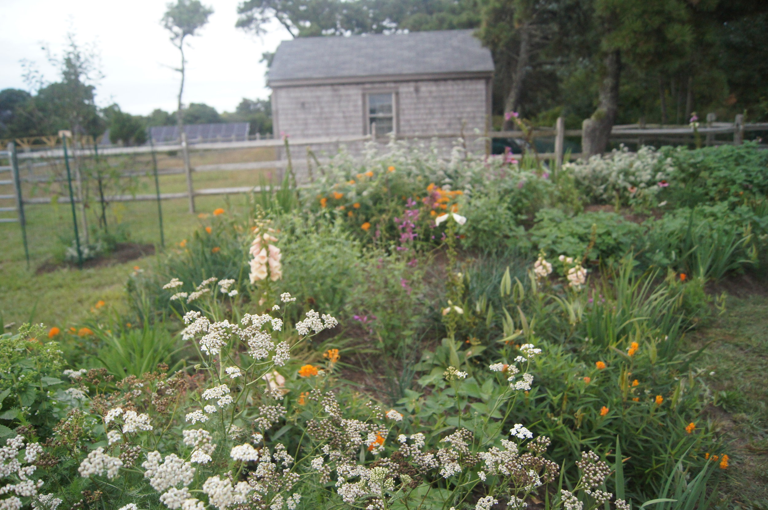 garden festivals in Nantucket