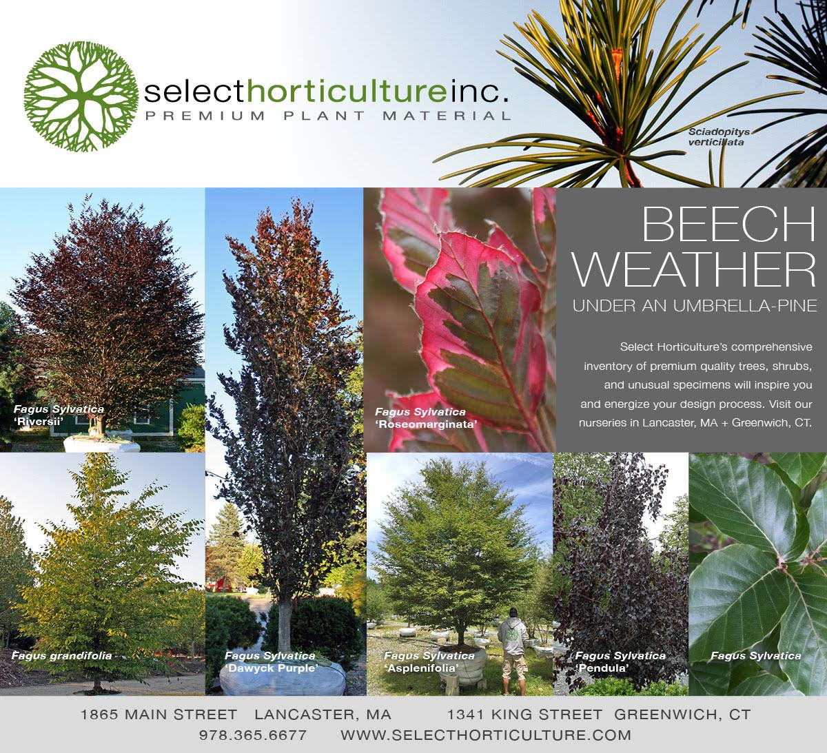 It's Beech Weather at Select Horticulture