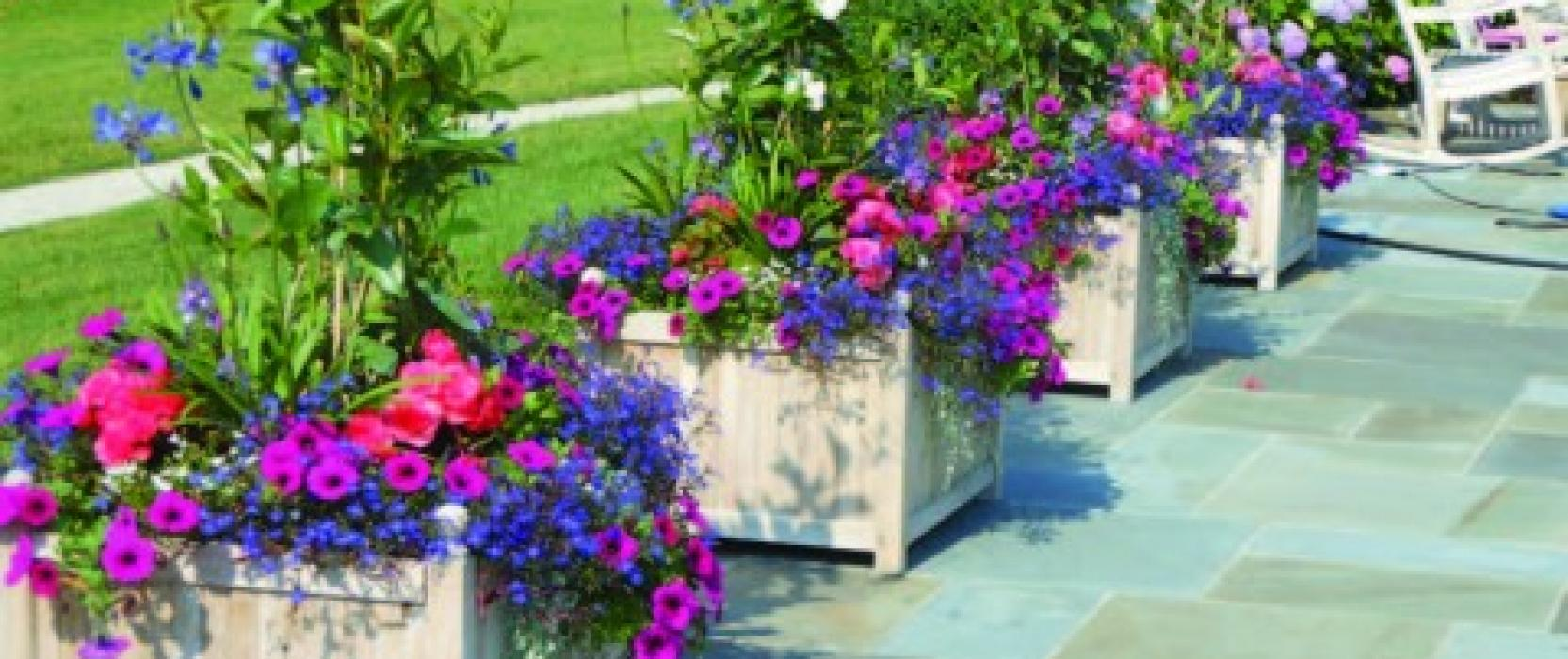 How to choose the best flower container for your home