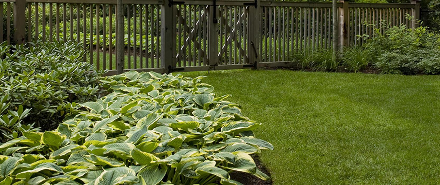 Homeowner landscape tip: how much mulch