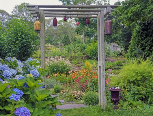 A Summer Garden Celebration—2020 Cape Cod Hydrangea Festival