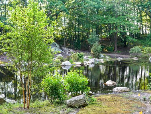 A naturalized pond restoration by landscape contractor Landscape Creations