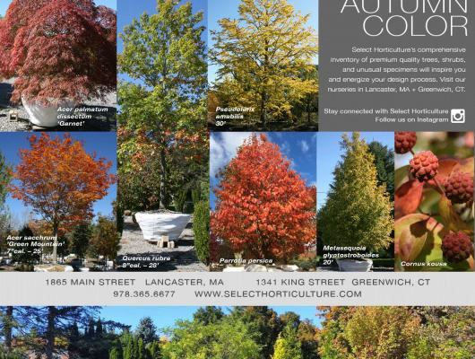 Autumn Color at Select Horticulture