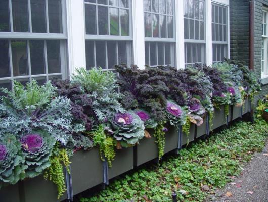 Fall Flower Box Window Arranagement