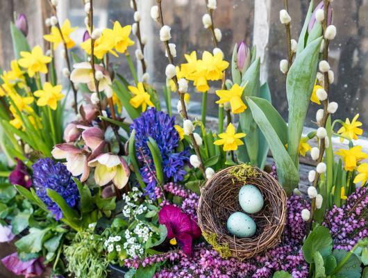 Window box arrangement for spring