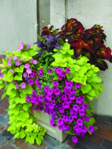 How to choose the best flower container for your home boston design guide - Best flower combinations for containers ...