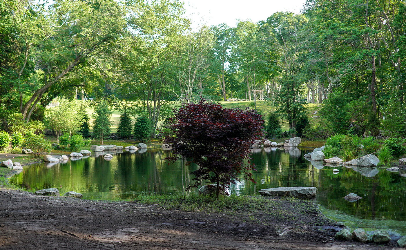 Naturalized New England landscape with restored pond by Landscape Creations